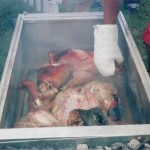 Image of Pig B
