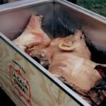 Pig B in Box